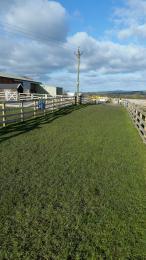 Grass around Animal Paddocks