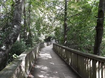 The wooden walkway to viewpoint