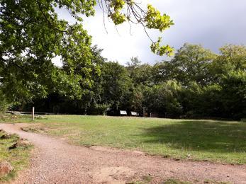Grass picnic area.