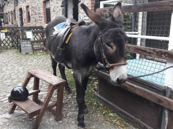 Donkey rides are available