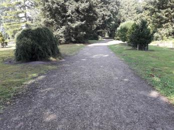 One of the older paths in the National Pinetum. These can be a little uneven in places. We hope to upgrade all the paths.