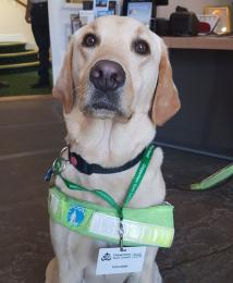 Assistance dogs are welcome at Chippenham Museum
