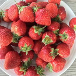 Coll grown strawberries