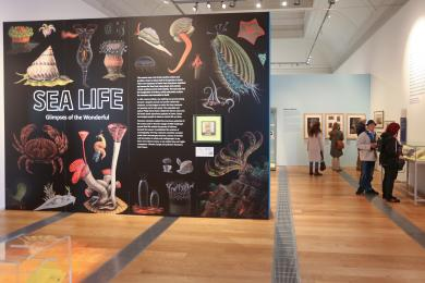 A photograph of the temporary Sealife exhibition gallery space.