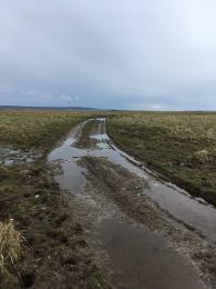 Beach Trail track in the wet