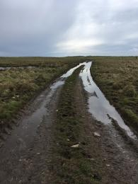 Beach Trail track mud