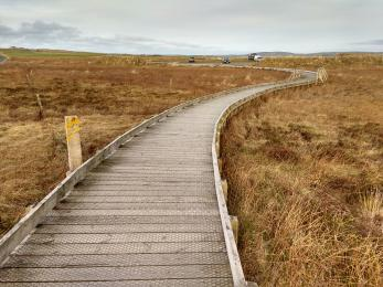 Boardwalk at entrance to reserve