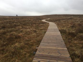 Viewing tower access boardwalk example