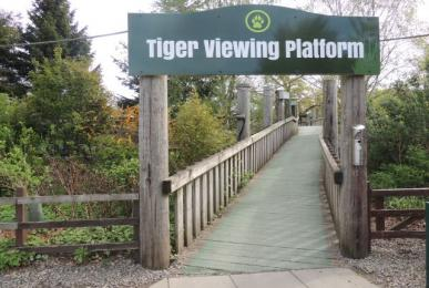 Entry to tiger viewing platform
