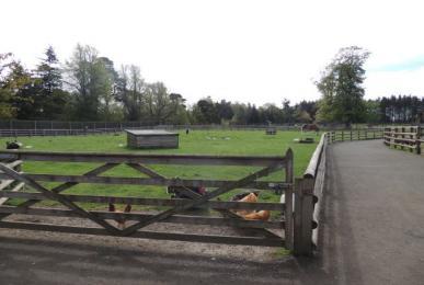 Pets Farm path