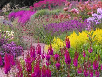 Floral Labyrinth