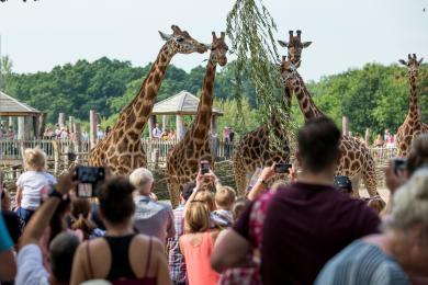 Giraffe talk