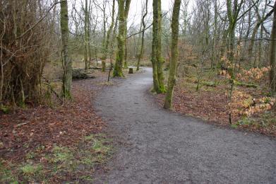 Aird meadow trail