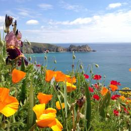 A selection of flowers in the Minack gardens.