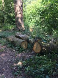 Wood pile off of side of path