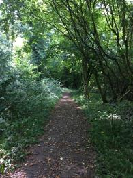 Part of the path after the picnic area. Showing the sloping gradient and the loose surface litter.