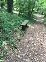 One of the two wooden benches on the Woodland Trail. Bench has no back or sides.