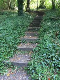Part of long staircase of steps on Scarp Trail