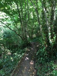 Narrow part of the Scarp Trail with wooden edging on sides of path