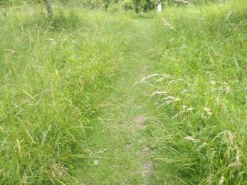 Arboretum grass path