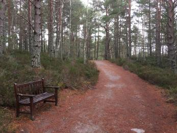The path from the Welcome Kiosk to the Nature Centre centre, with bench.