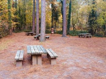 Forest picnic area at Moors Valley