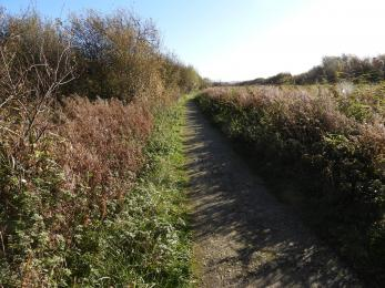 Main trail's compacted limestone path continues through lush reed bed and coppice.