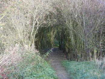 Entrance to short broken pathway leading to Ousefleet hide and viewing screen.