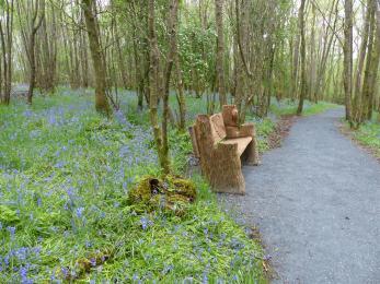 Airey woodland trail