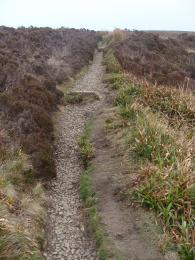 Trail surface and raised cross drains on Waulkmill Bay Trail North