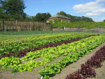 The interior of the Walled Garden. There are growing beds with rows of vegetables in the ground.