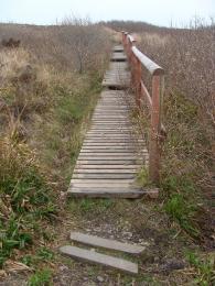 Boardwalk on Waulkmill Bay Trail North