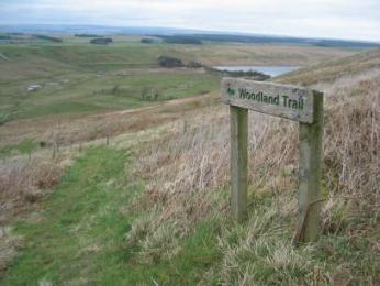 Woodland Trail Marker