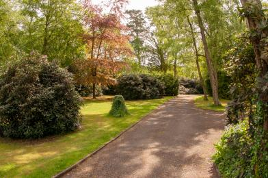 Front garden and drive