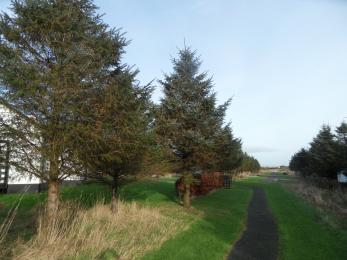 Paths are a combination of Grass and Tarmac