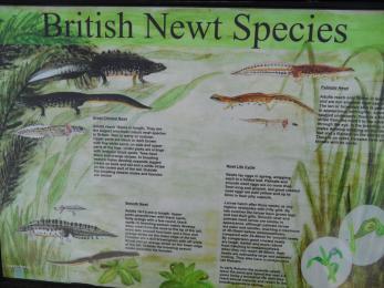 Interesting Wildlife at Culmore Bridge