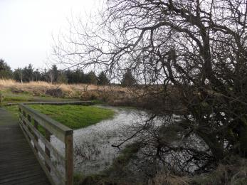 Pond Area at Culmore