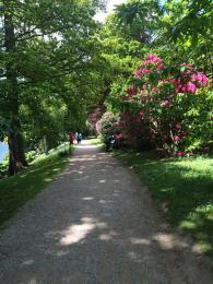 A section of the lakeside path. The path is gravel with grass verges either side. There are trees and bushes along the path.