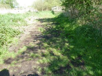 Fen trail- damp conditions