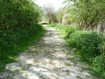 Fen Trail- riverbank in very dry conditions