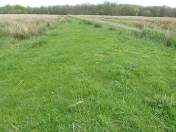 Meadow trail- grassy path