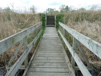 Meadow trail- steps to riverbank