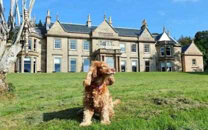 Raasay House is dog friendly.