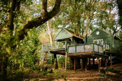 Woodland area around treehouse