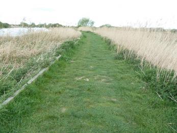 Woodland trail- riverbank path