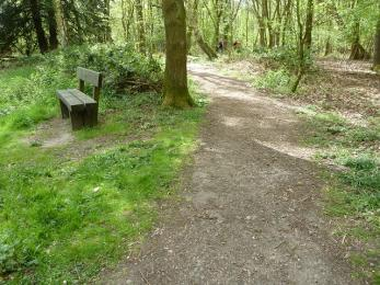 Woodland trail- compacted granite