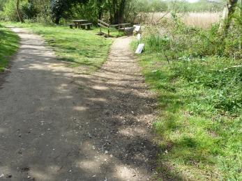 Woodland trail- compacted earth path