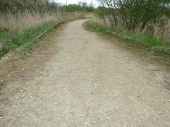 Woodland trail- Sandy Wall