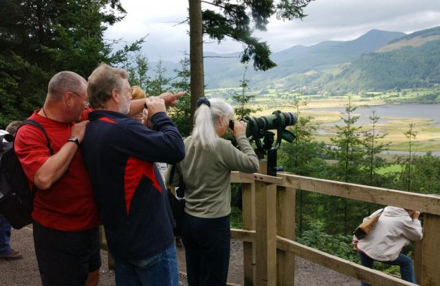 Osprey viewpoint area