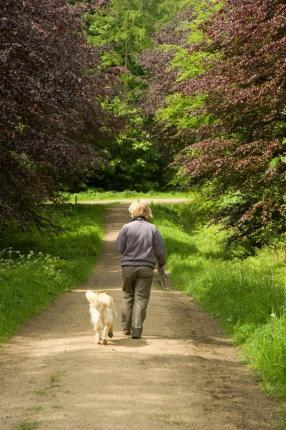 Dog walker in Chopwell Wood